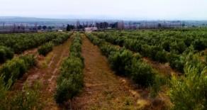 Rivadavia, Prov. de Mendoza – 832 Has